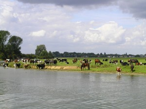 port-meadow
