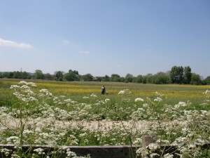 Isis Towpath_meadow