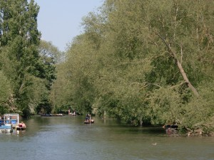 Isis Towpath_punts on Cherwell