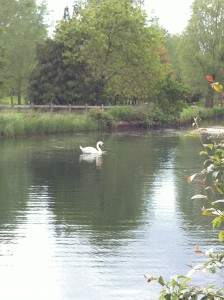 Lower Slaughter_swan