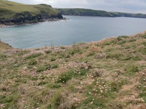 Cornwall_Coast and flowers