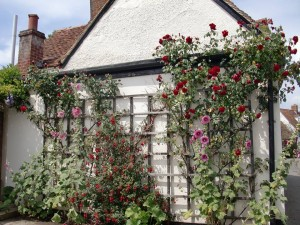 Dorchester wall of flowers