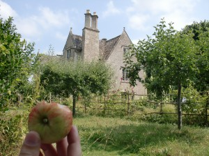 Kelmscott - apple thief