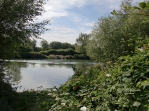Aston's Eyot - Thames