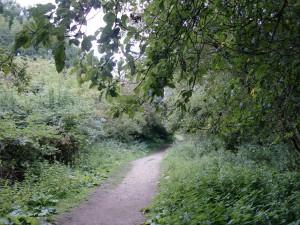 Aston's Eyot - path