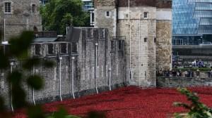 moat poppies2