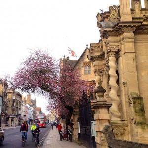 High street pink
